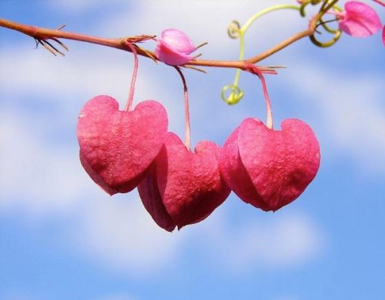 hearts-7